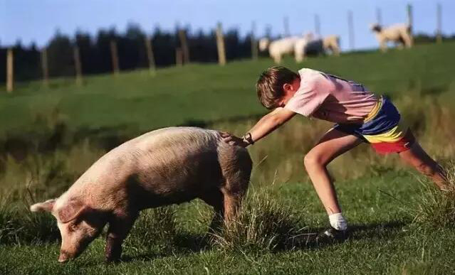 农活伴随着Sinyard的少年时光