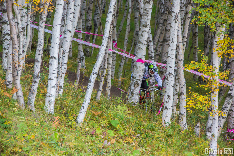 中等难度路线的技术点大部分被设在了一大片白桦树林里。