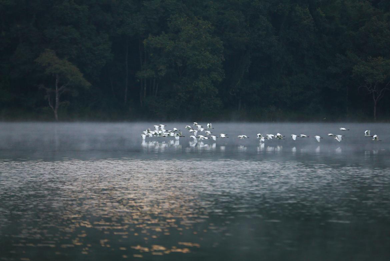 《秘境孔雀湖》