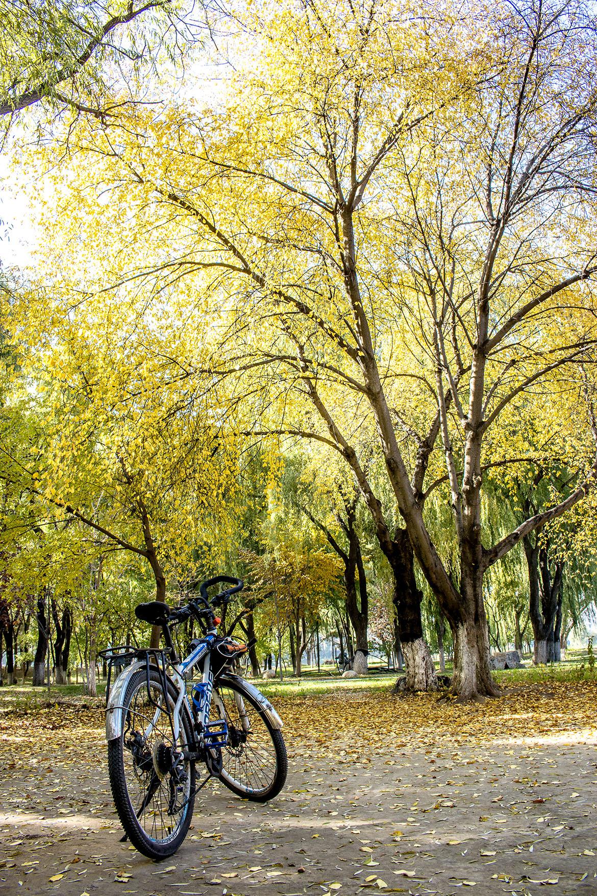 金色树林.jpg
