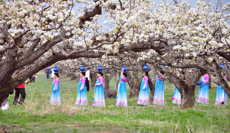 苹果梨花.jpg