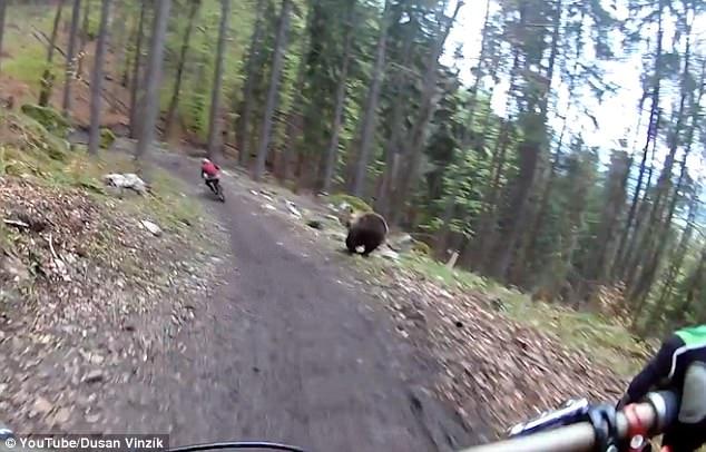 黑熊追赶骑手