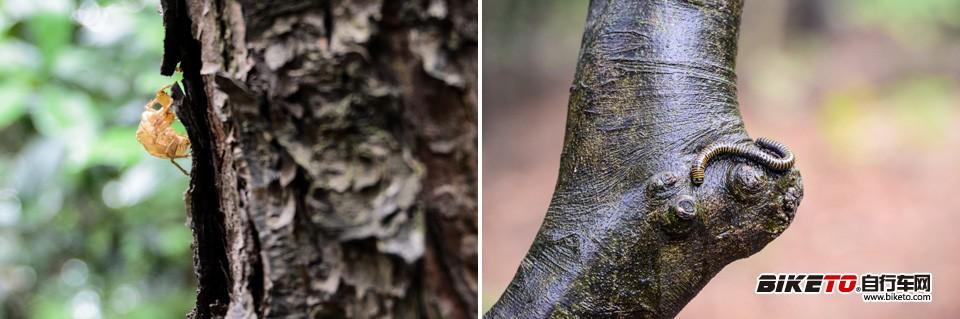杭州茂密的植被中隐藏着各种小动物