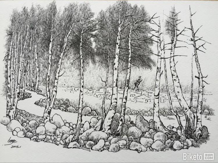 单车画师丨白桦林