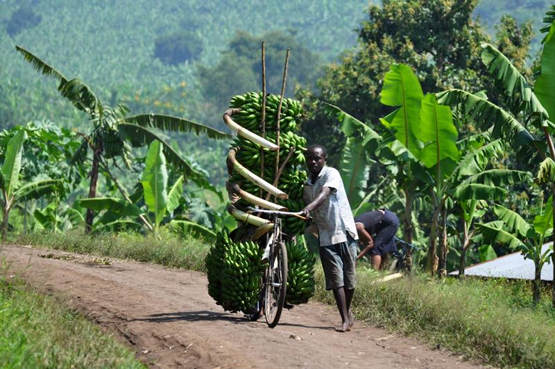 自行车运输业,布隆迪,印度阿三,自行车特技