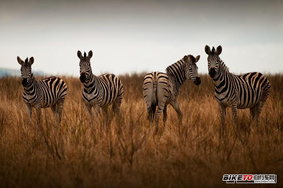 南非的呼唤 (2).jpg