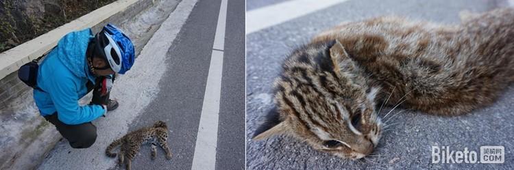 可怜的动物图片