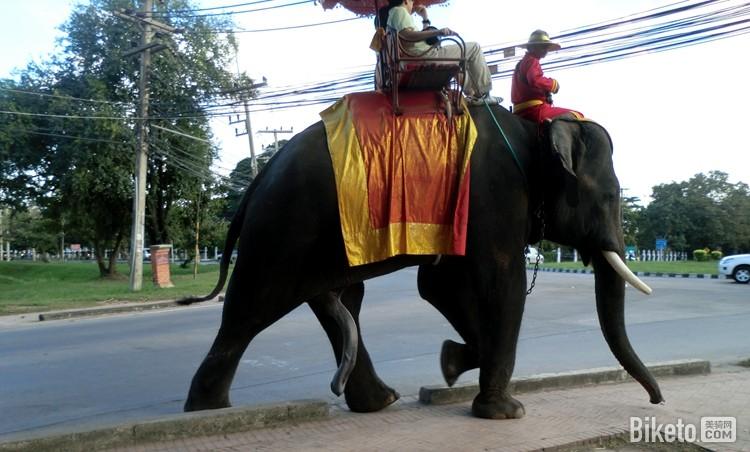 点彩画法步骤大象
