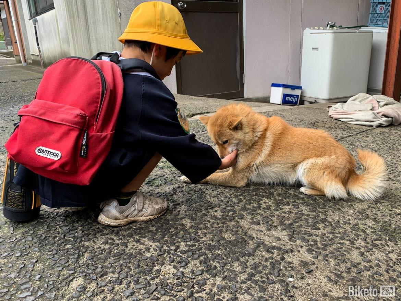 小药水,四国,日本,柴犬