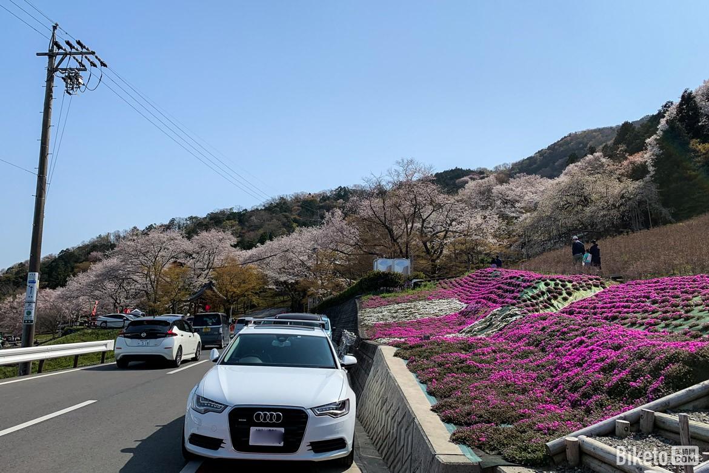 小药水,日本,骑行,樱花