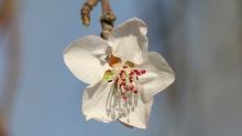 骑车赏花:微距镜头下长春街头的春天气息