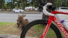 【小药水骑行日记】八幡木津自行车道:骑到奈良看小鹿