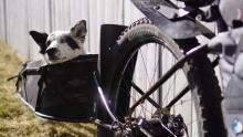 如果约伴骑车很难,不如带上一条狗 Dogpacking考虑一下