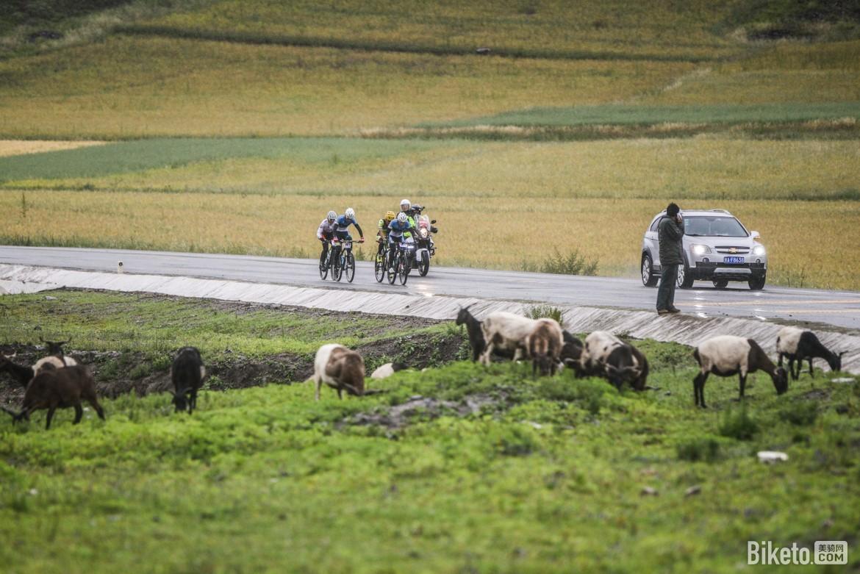 甘南赛,越野赛,藏地传奇,美骑网,龚亮呈-7209.jpg