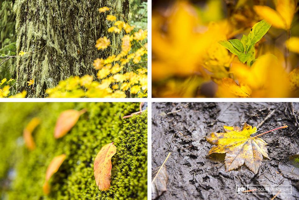 树叶颜色渐变