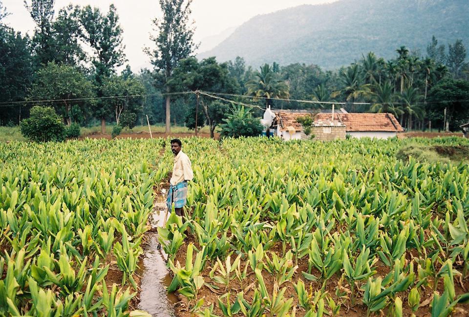 印度的农民