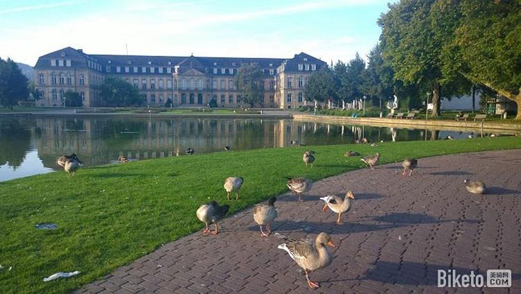 湖边漫步的鸭子