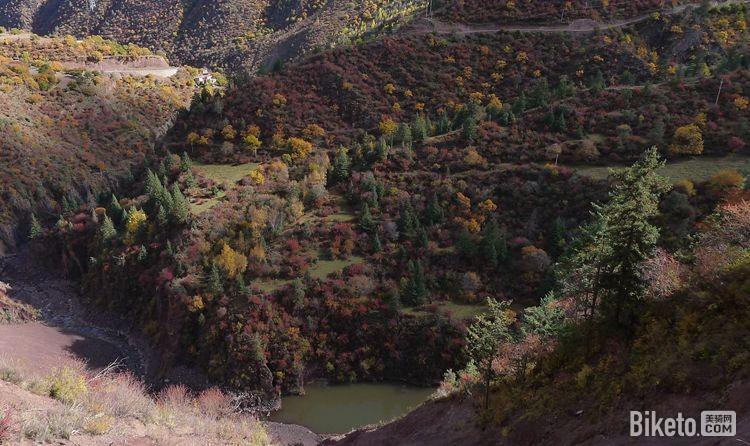 色彩斑斓的树群