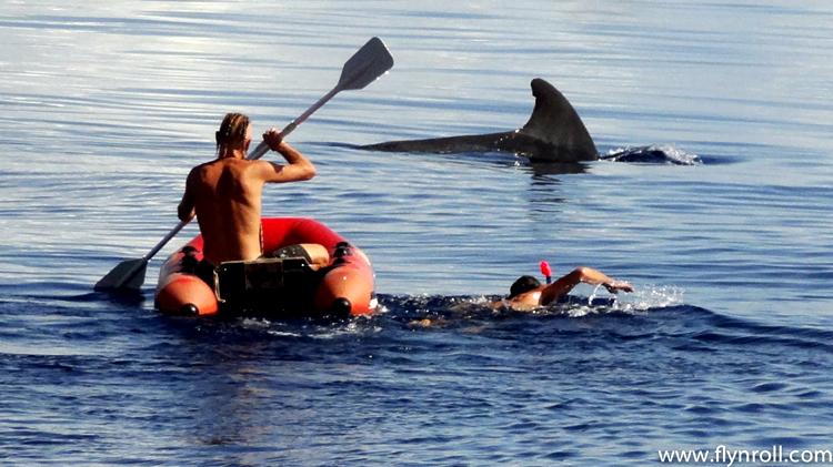 游泳遇到鲨鱼