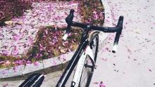 剁手清单:你听我说啊,真的是自行车先动手的