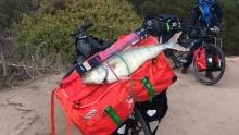骑钓澳洲:在被遗忘的西南角吃鲱鱼