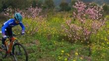 广西最大桃李基地海洋乡骑游记:桃花朵朵开