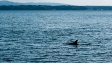 【小药水骑行日记】北陆行D1:与野生小海豚相伴